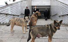 В столице разрабатывают новые правила жизни и смерти собак и кошек