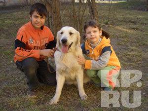В Красноярске породистых собак вырывают прямо у хозяев из рук