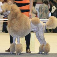 9 октября впервые в Армении состоится Международная выставка собак