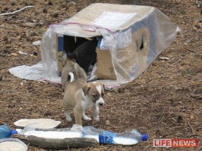 Пять замурованных щенков спасли из подвала (Курган)