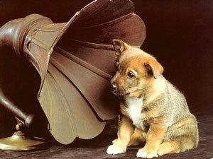Для собак пишут музыку и снимают кино
