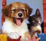 Собаки снижают проявления аллергии у детей, а коты – увы, наоборот