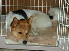 Юристы и биологи раскритиковали новый закон о содержании животных в Москве
