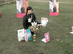 Чихуахуа завоевал бронзу как лучшая служебная собака