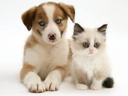 Cитуация в России с законопроектом о защите животных