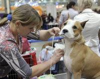 """В центре """"Крокус-экспо"""" прошла крупнейшая в России выставка собак"""