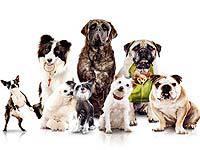 Некоторые породы собак плохо адаптируются в Грузии