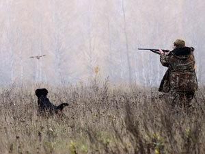 Спаниель вырвался вперед и напоролся на стреляющую ловушку
