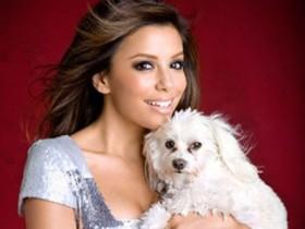 10 самых милых собачек знаменитостей