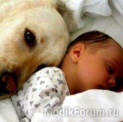 Собачья ревность: как справиться?