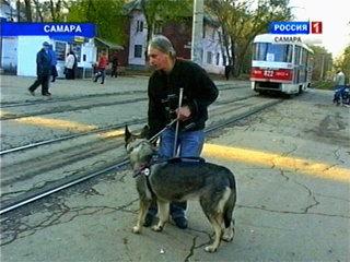 Сегодня - Международный день собак-поводырей