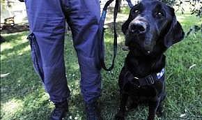 Поцелуи со служебной собакой караются законом (Австралия)