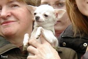 ФАС не понравилась реклама про папу с аллергией на собак