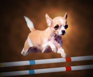 В Италии прошли первые Олимпийские игры для собак