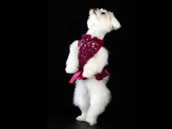 В Нью-Йорке открылся диско-клуб для собак