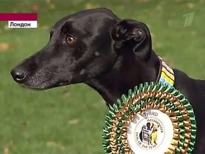 Британские парламентарии провели выборы среди своих собак
