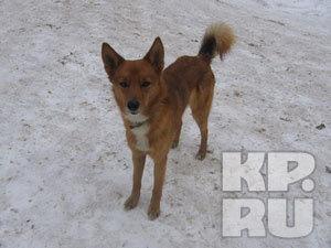 Решать вопрос с приютом для собак будет Никита Белых (Кировская область)