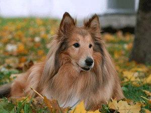 В Екатеринбурге докторов заменяют собаки