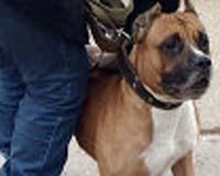 Эксперты уверены: в агрессии собаки всегда виноват хозяин