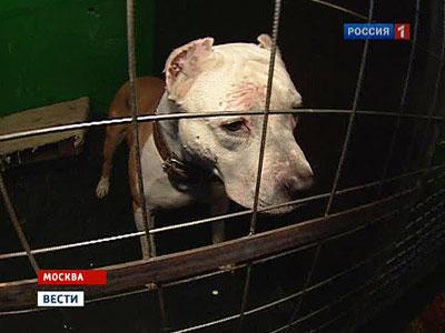 Элитным собакам не хватает мест в московских приютах