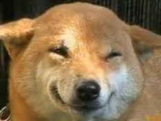 Найден пес, который улыбается при виде хозяина