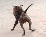 Какие породы собак нападают чаще