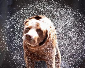 Разработчики стиральных машин решили поучиться у собак