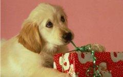 Немцы заявили о желании поздравить с Рождеством домашних животных