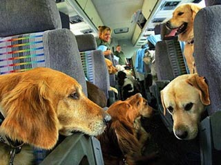 Собака стала участником программы часто летающих пассажиров SAS