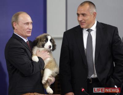 Путин придумает щенку новое имя