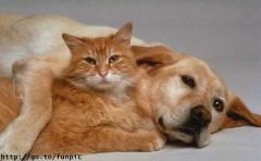 В Приморье создают собачьи апартаменты