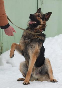 Собаководы требуют места для выгула собак и урны для экскрементов (Томск)