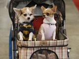 Японским собакам организовали день развлечений
