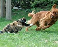 Ученые признали собак умнее кошек