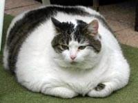 Эпидемия ожирения распространилась и на животных