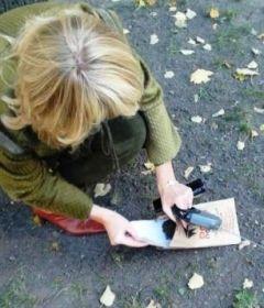 В киосках Петербурга могут появиться DOG-пакеты