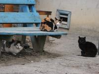Кировчане провалили перепись домашних животных