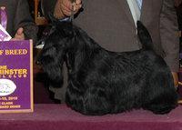Самая престижная в США выставка собак открывается в Нью-Йорке