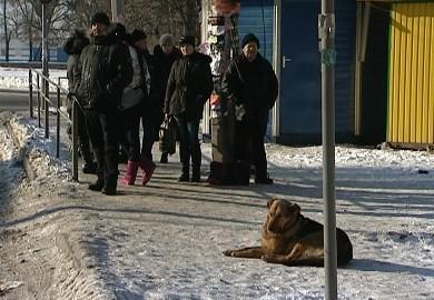 Собачья преданность (Харьков)