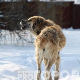 В Казани займутся регистрацией собак