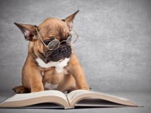Собаки помогают преодолевать трудности чтения
