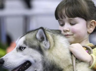Общественная палата предлагает установить обязательную регистрацию животных и запретить торговать ими на рынках