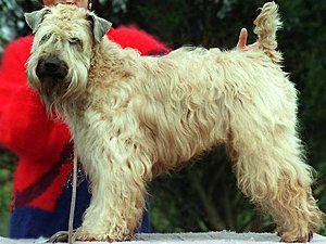 В США собаку единогласно избрали управдомом