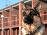 Владельцев собак обязали пройти курс дрессировки (Магнитогорск)