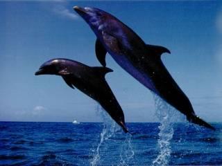Дельфины спасли жизнь собаке