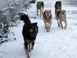 Массовое отравление собак произошло в Екатеринбурге