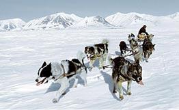 Первый в России памятник собачьей упряжке появится в Анадыре