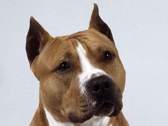 Австралиец предоставил суду характеристику личности своего пса