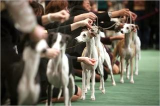 Проведение в Паттайе выставки собак тревожит власти города