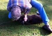Дрессировщик спас жизнь собаке, сделав ей искусственное дыхание